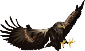 鷹と鷲の違いとは?大きさが関係してる?