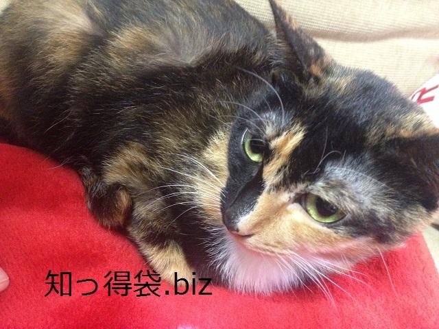 【MH3G】ネコの換算術を効率よく発動する方法