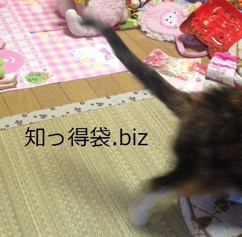 しっぽを上げてよろこんでいる猫