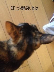 熱い時の猫の耳