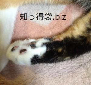 噛んでいる猫の爪