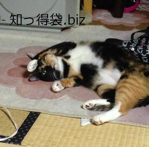 猫の寿命はどのくらい?平均は意外と高い!?