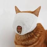 猫の爪切りができない!その悩みはマスクが解決だ!