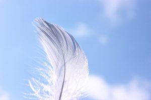 美しい羽、綺麗な羽根